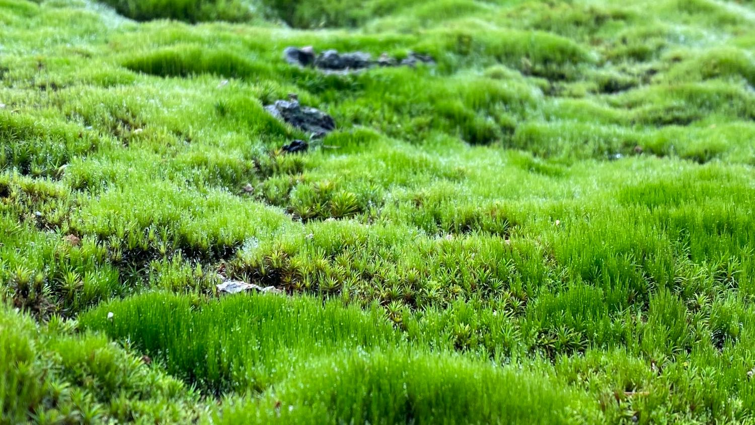 Icealnd is the realm of extremities. You can find snow in summer, and spring green in late autumn