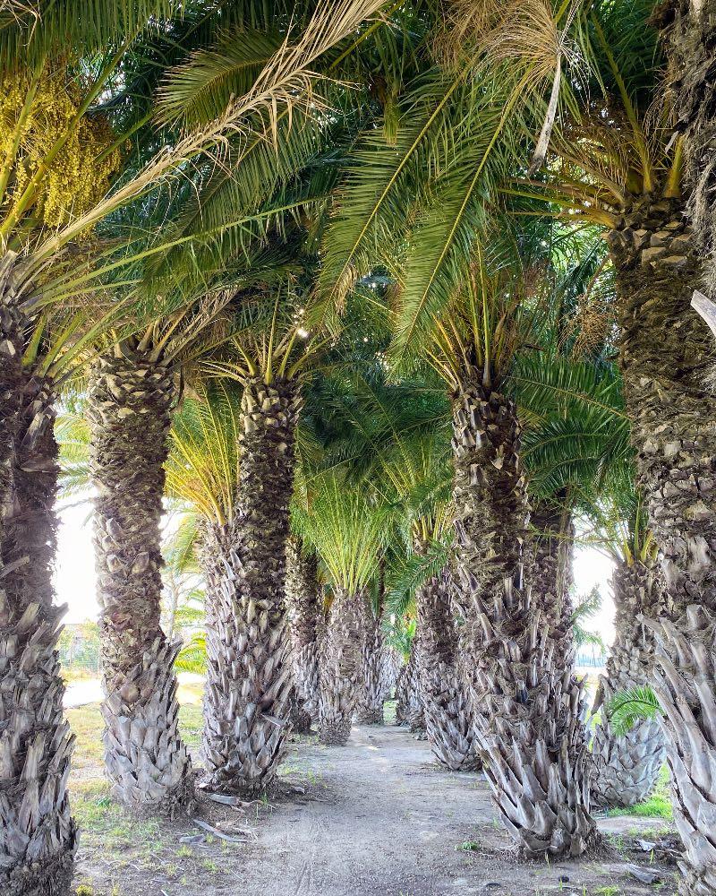 Palm trees paradise